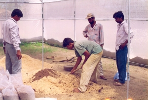 Planting prep20001