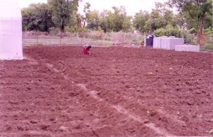 Ploughing completed: Nanda picks stray weeds