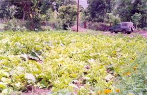 Exotic veggies