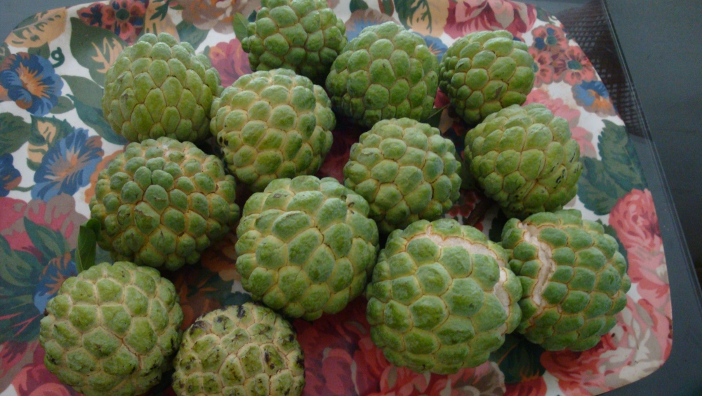 Did you know Custard apples have health benefits too?  (2/2)