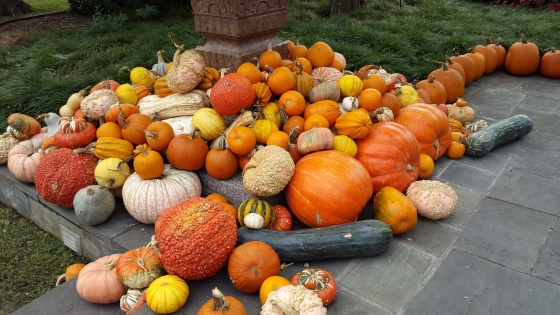 More pumpkins