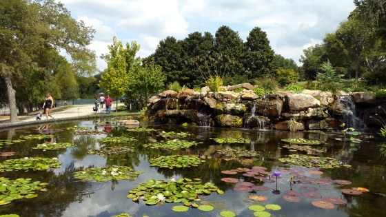 Waterfall and lotus pond